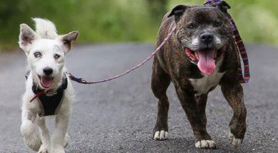 Blind-dog-and-his-guide-dog-show-what-it-truly-means-to-be-BFFs