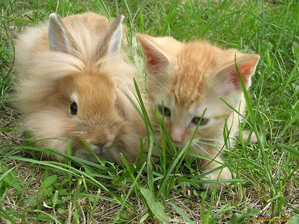 brother-from-another-mother-similar-animals-02-5788d3eaa1ee9__605