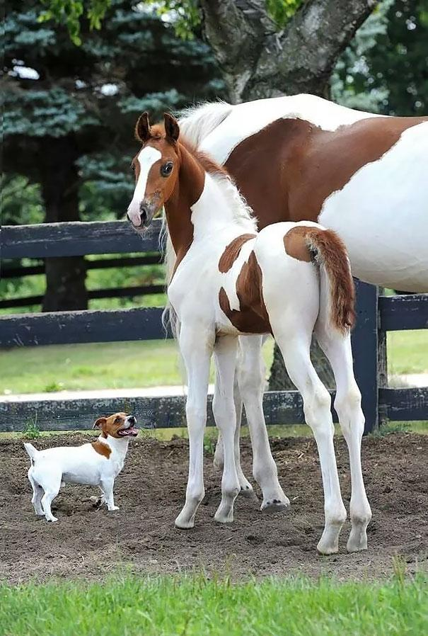 brother-from-another-mother-similar-animals-2-5786298929f7d__605