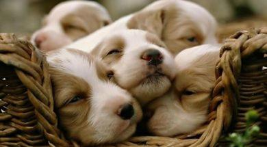 cute-puppies-0