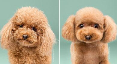 dog-grooming-photography-0