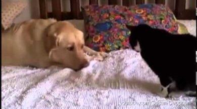 Te psiaki tak bardzo chcą się zakumplować z kotami, że pękniesz ze śmiechu!