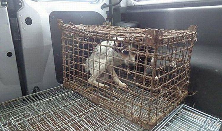 Liszka umierała uwięziona w klatce, nie umiała nawet normalnie chodzić. Tylko zobaczcie, co wyprawia teraz!
