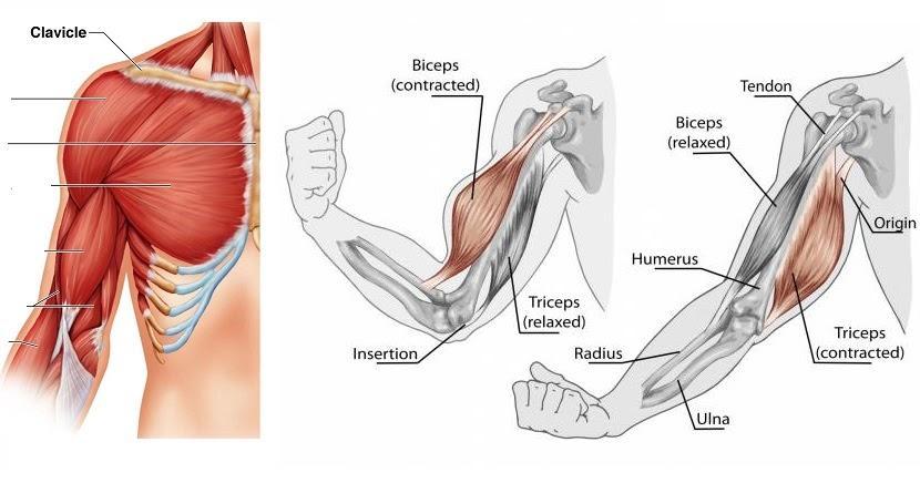 5 rzeczy, które musisz zrobić po treningu, aby przyspieszyć regenerację mięśni