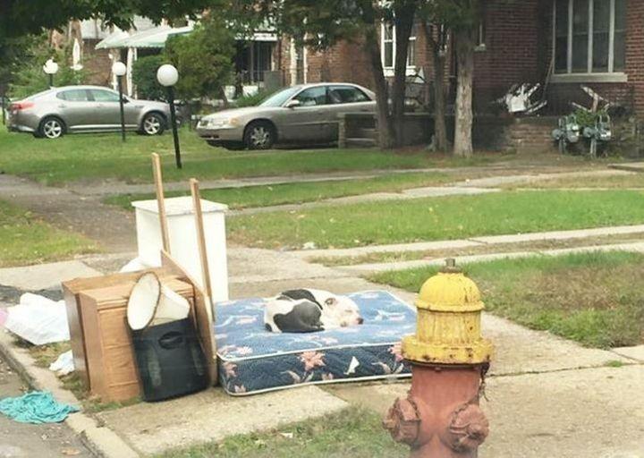 Razem z niepotrzebnymi rzeczami wyrzucili na ulicę psa! Zwierzak czekał, aż po niego wrócą