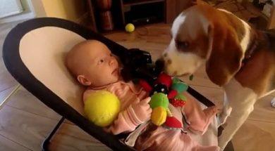 dziecko_i_pies