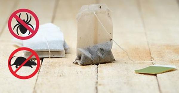 Wystarczy jedna torebka herbaty i już nigdy więcej nie zobaczysz myszy ani pająków w domu!