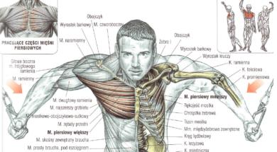 trening klatki piersiowej rozpietki na bramie