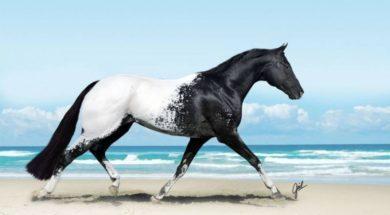 konie-10