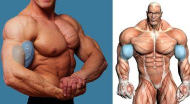 add-size-to-your-biceps