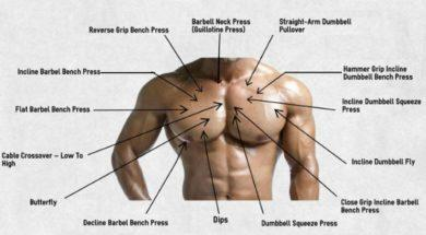 chest-exercise-ypu-need-to-master