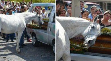 koń-0
