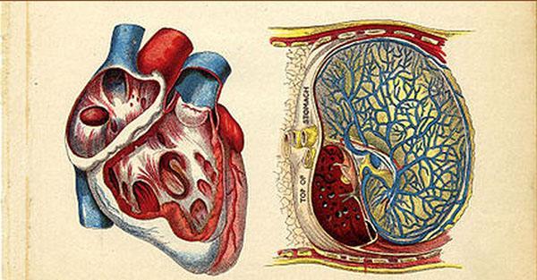 Odkryto przyczynę wszelkich chorób krążenia, zawałów serca i zgonów. Dowody są niepodważalne.