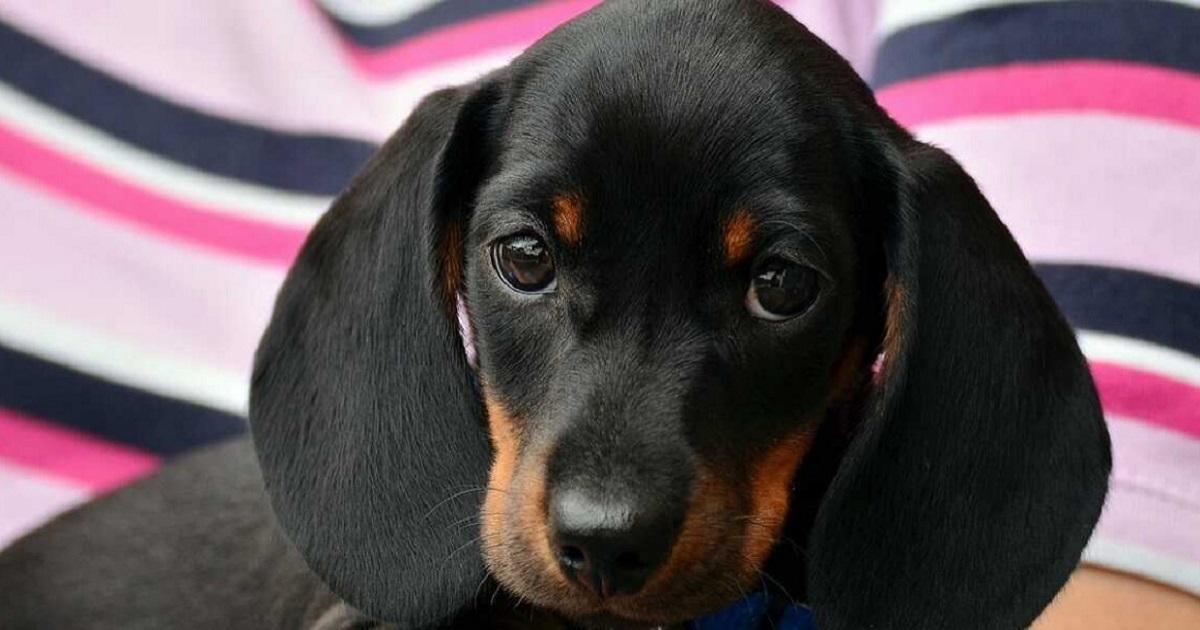 Rekordowo wysoka kara za znęcanie się nad psem. Zwyrodnialec trafi za kratki na 5 lat.
