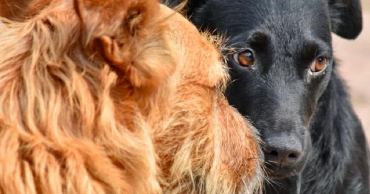 Popieracie wyższe kary za znęcanie się nad zwierzętami?