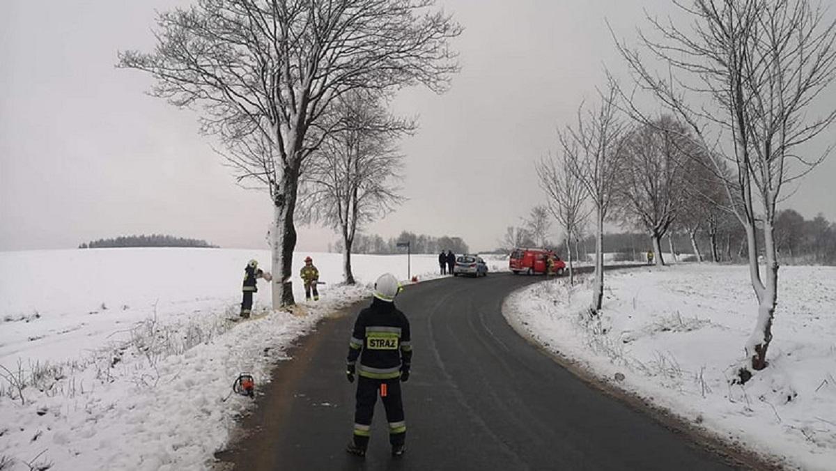 O krok od tragedii. Podciął 30 drzew na Kaszubach. W każdej chwili mogły runąć na jezdnię. Policja szuka świadków.