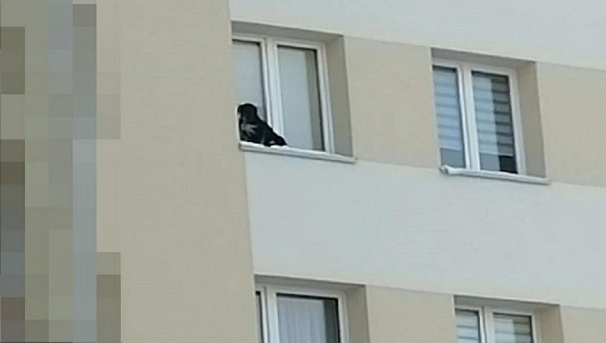 Bestialstwo! Sadysta wystawił psa na parapet na 9 piętrze! Na dworze panował siarczysty mróz.
