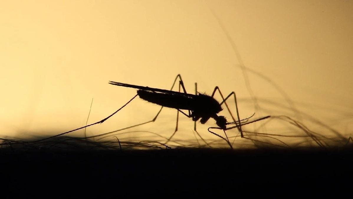 Gryzą, piją naszą krew, bzyczą, irytują. Wszystko nas przez nie swędzi. Czy komary są nam w ogóle potrzebne?