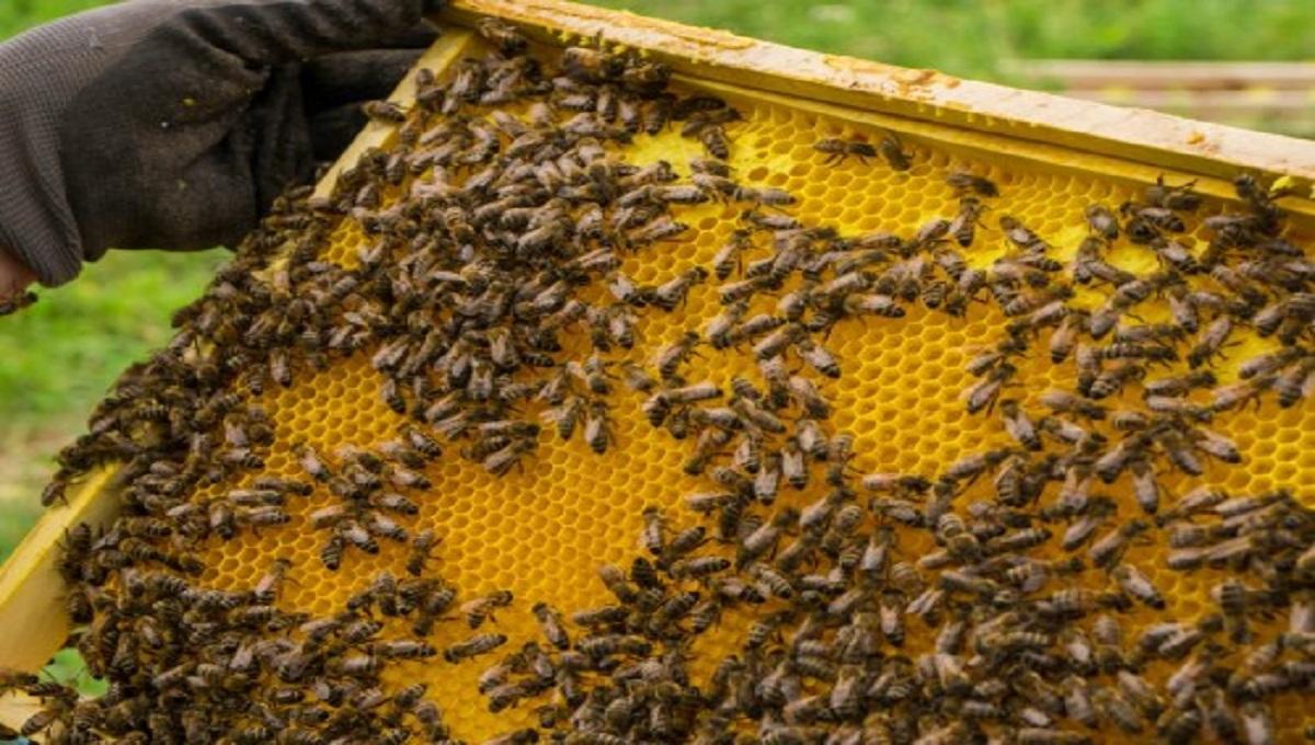 Zatrzymano truciciela pszczół spod Gostynina. Grozi mu do 5 lat więzienia.