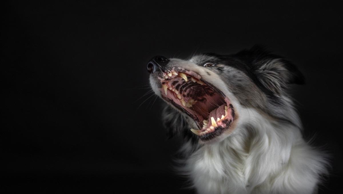 Koszmar w Poznaniu. Pies pogryzł 11-latka wracającego ze szkoły. Właściciel zwierzęcia nie udzielił dziecku pomocy.